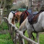 Cavalli a riposo presso Parco Madonna della Neve