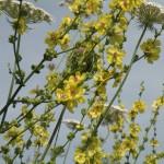 pianta (2)